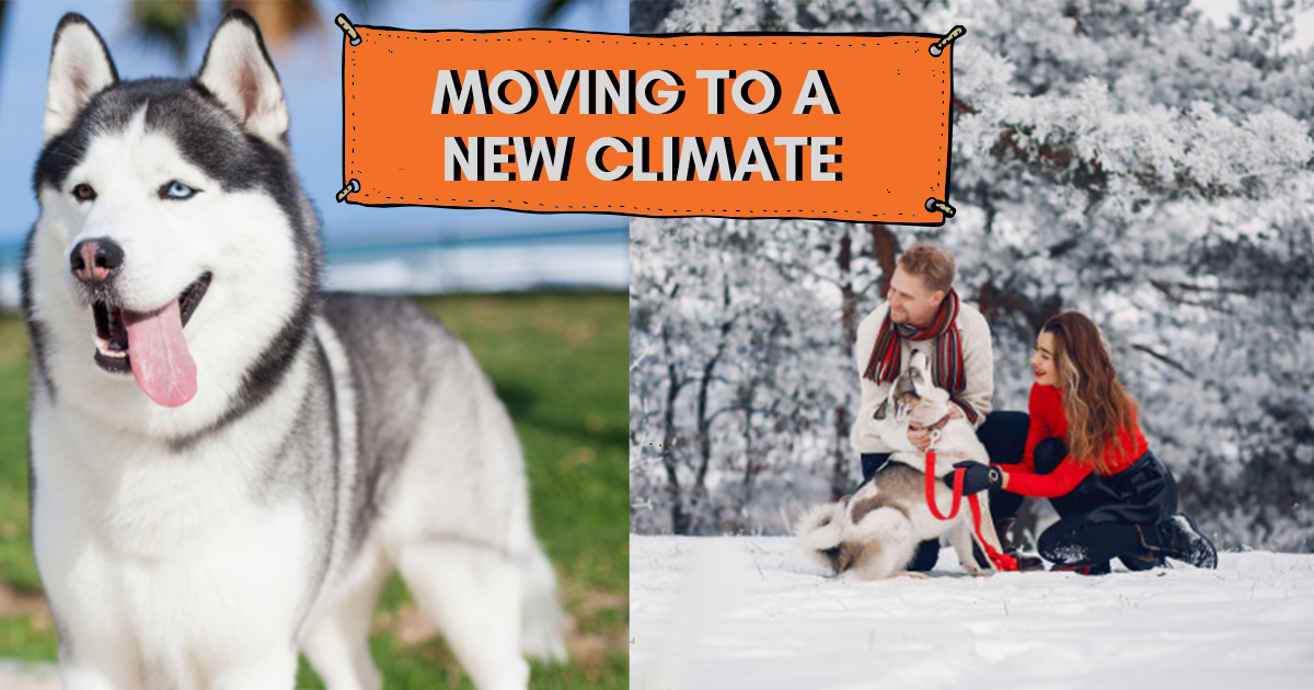 Moving to a New Climate header