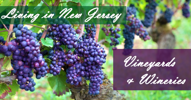 Moving to New Jersey The Best Wineries | Move It Cube It